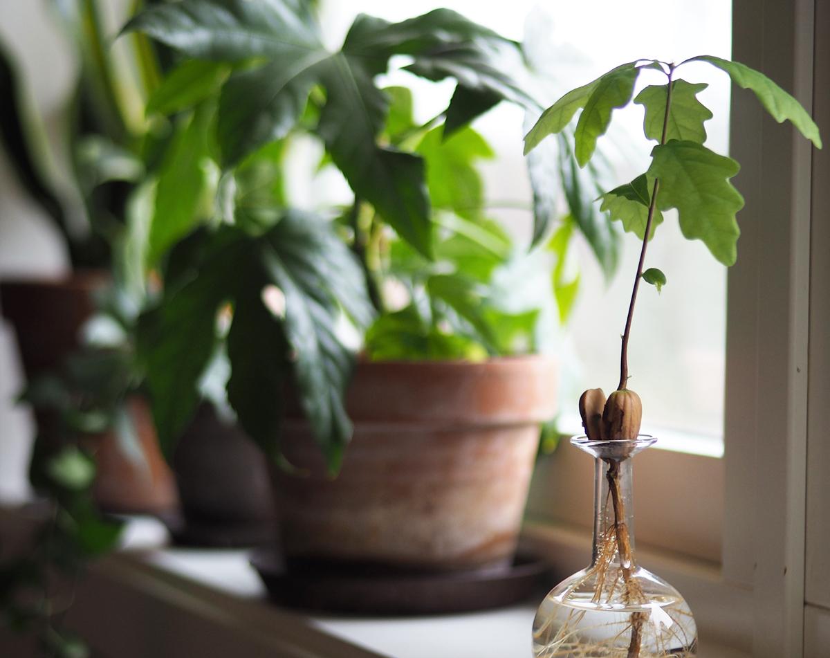gröna växter ren luft