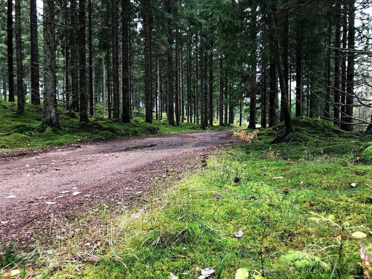 skogen hofsnäs